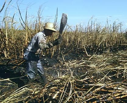 950-agricultor_cana_azucar