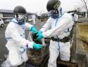 Japanese official arrested for alleged bribery over Fukushima decontamination contracts