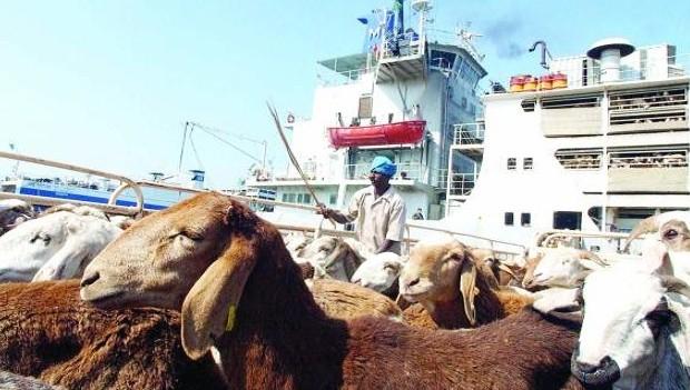 Saudi meat imports rise ahead of Ramadan