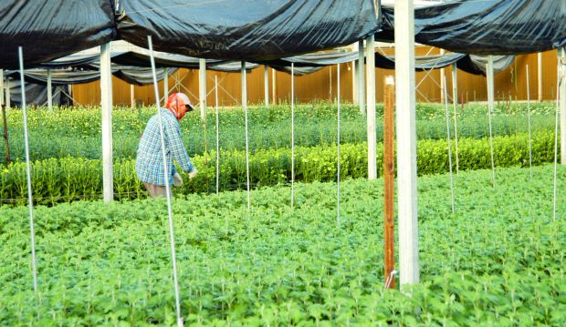Saudi Arabia to increase investment in agriculture and global food security