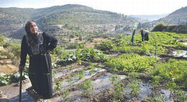 Sites in Iraq, Saudi Arabia, Palestine join UNESCO World Heritage List