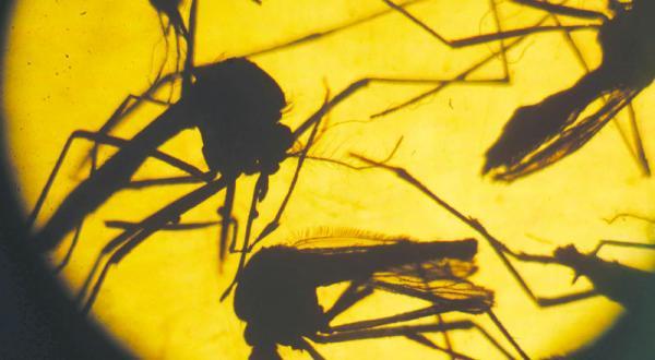 British Firm Fight Zika Virus Using Genetic Modification