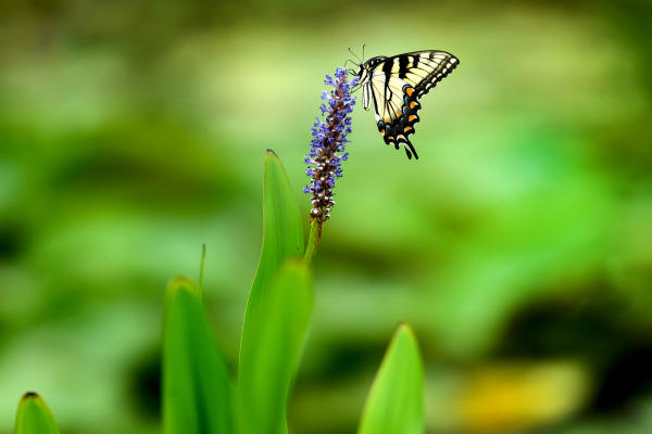 Insect and Animal Lovers Called for a Two-Day Bioblitz