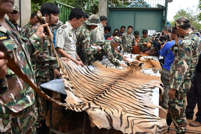 Thai Police Find Tiger slaughterhouse in Temple Probe