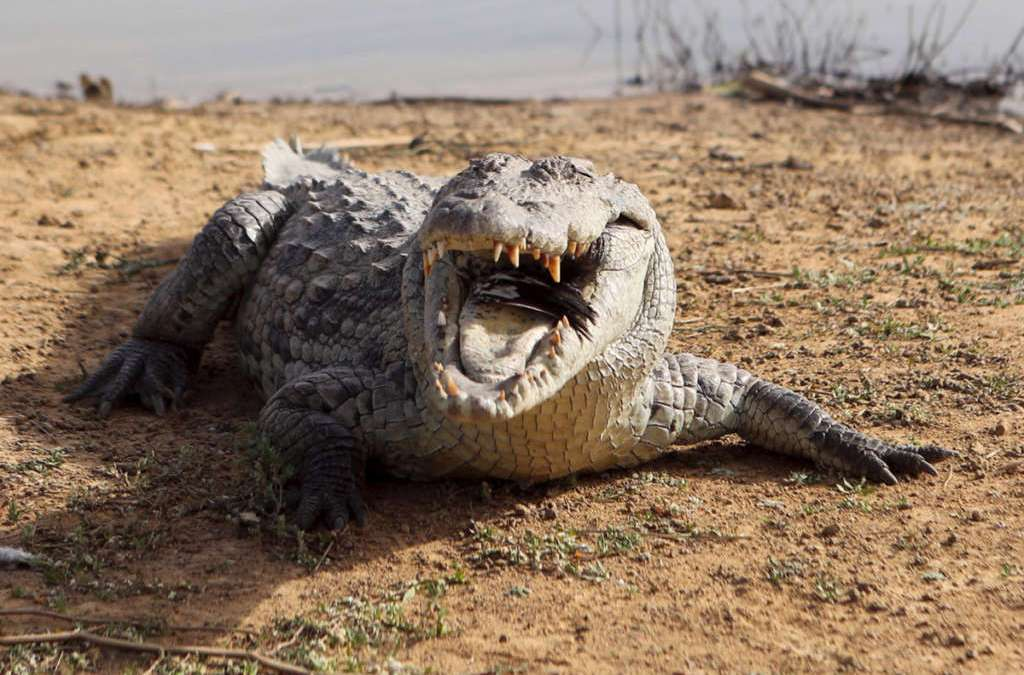 Australian Woman Rescued with 2 Dogs from Crocodile Infested Waters