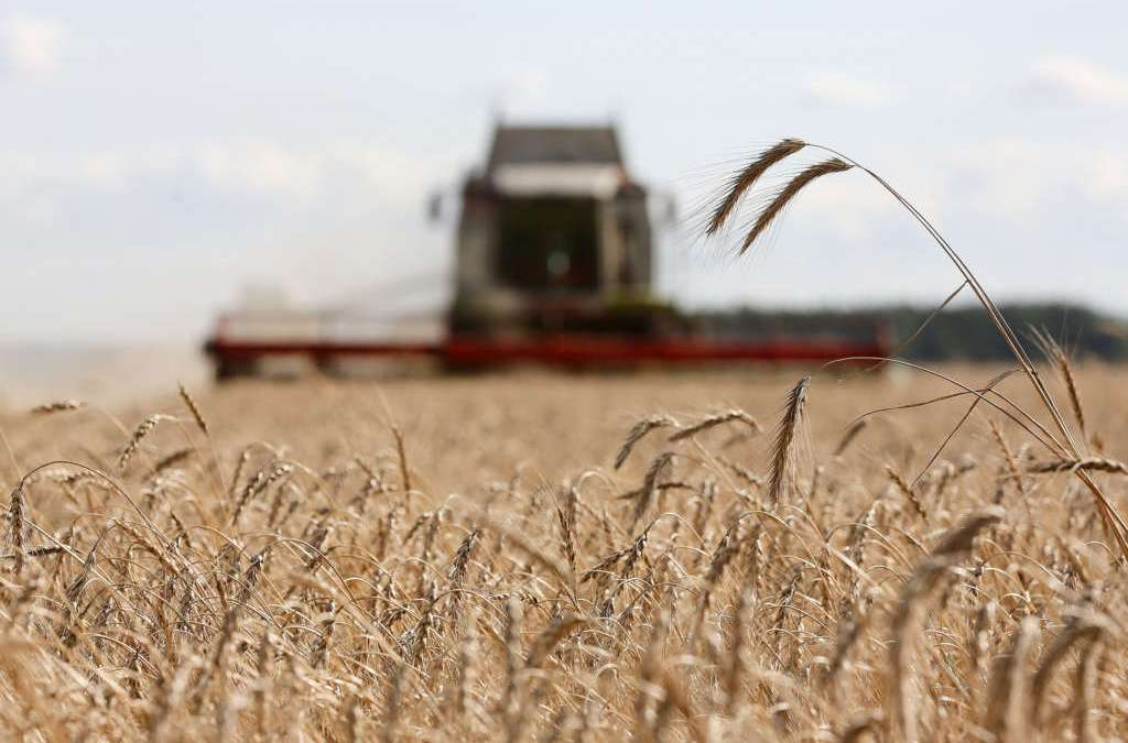 Russian Government Frees Grain Exporters from Taxes