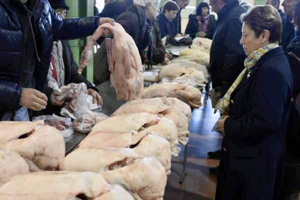 Severe Bird Flu Episode in France Calls on Duck Cull