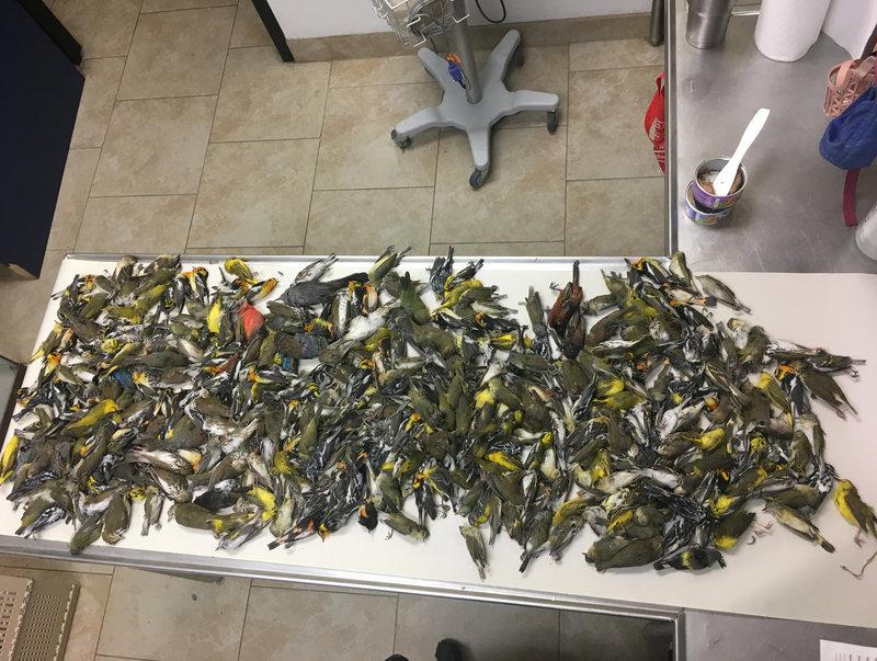 400 Migratory Birds Die from Striking Skyscraper in Texas