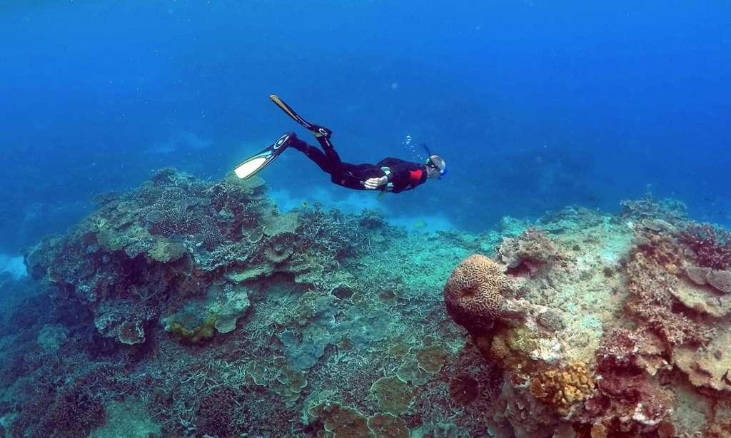 Thailand Finds Stolen Coral