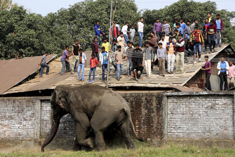 Wild Elephant Kills Four in Southern India