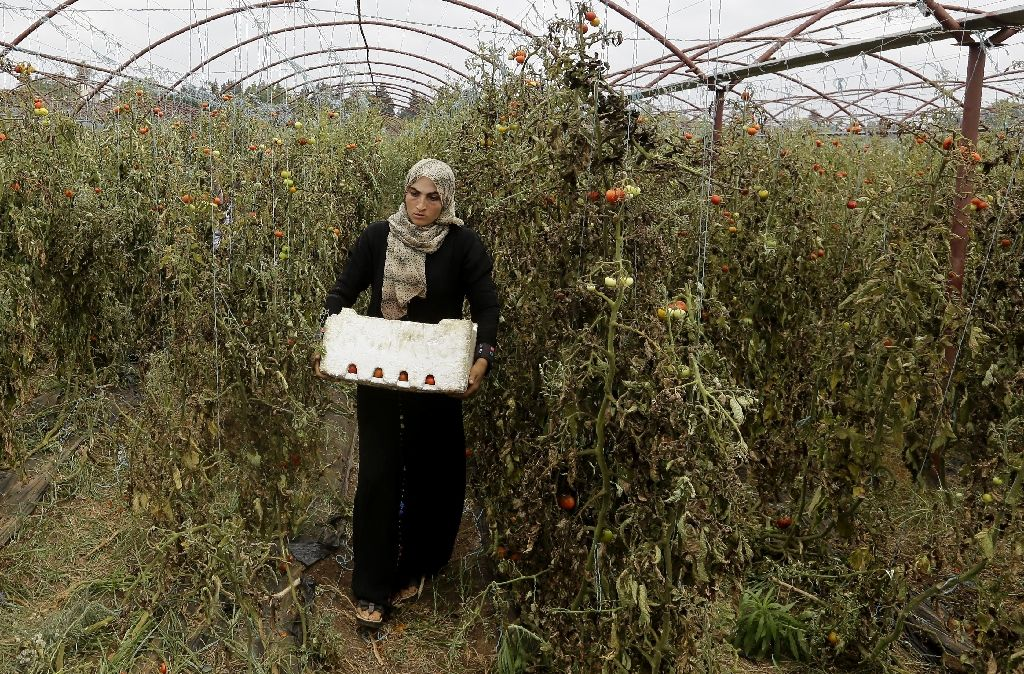 UN Helps Syria's Women Farmers by Treating their Livestock