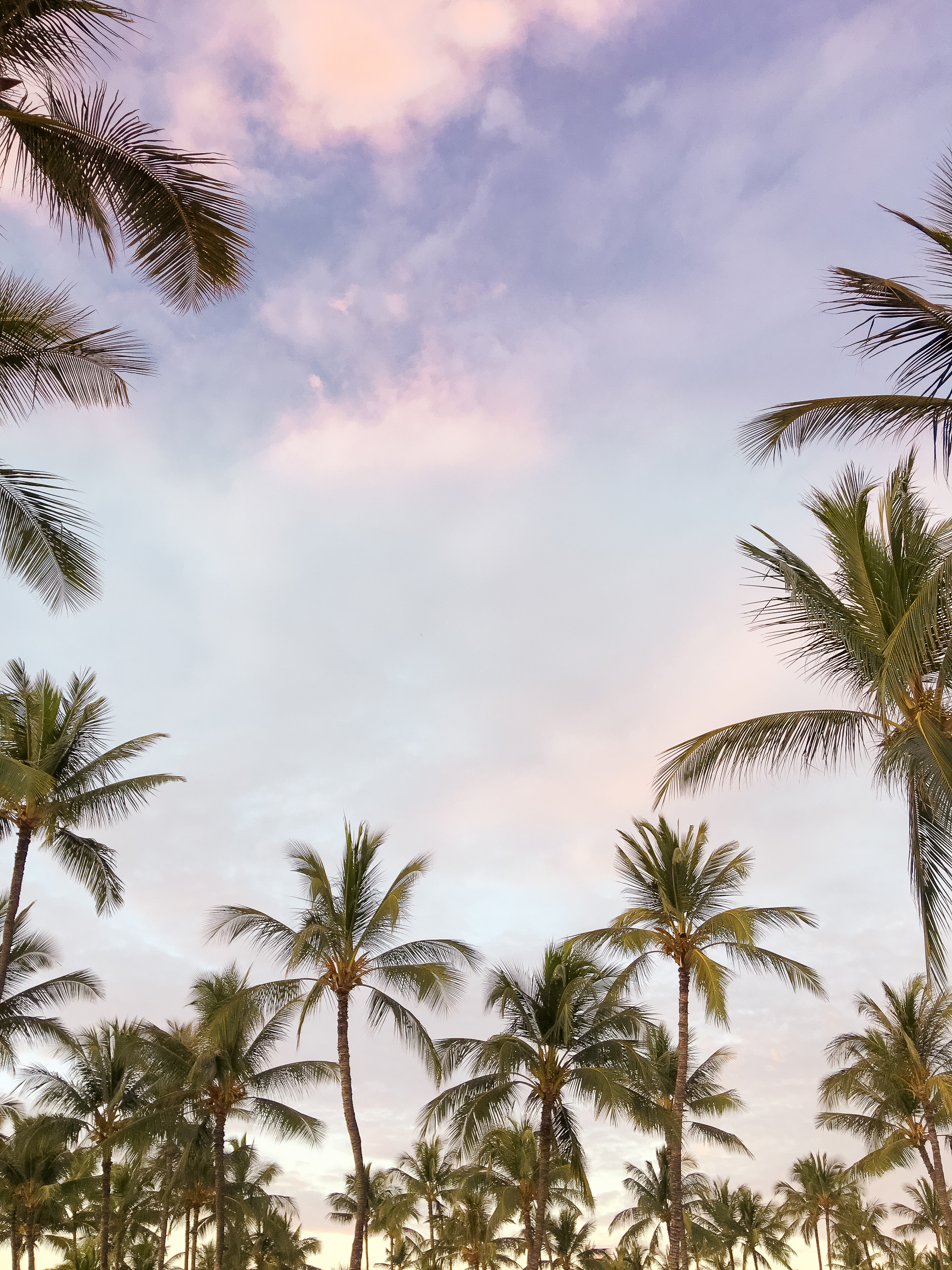 haute-stock-photography-tropical-vibes-final-1