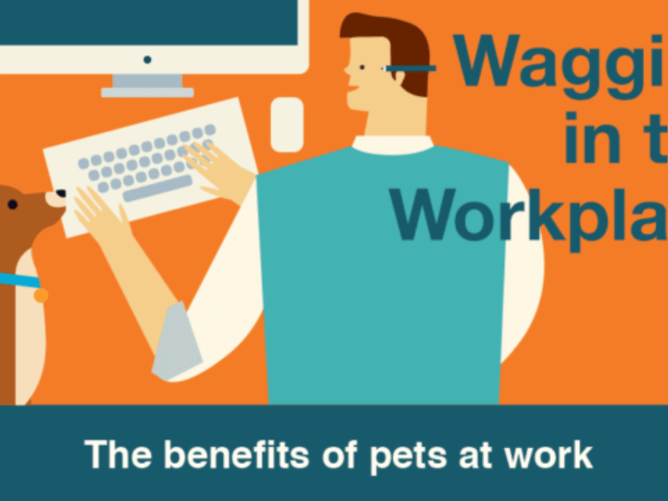 pet friendly workplace