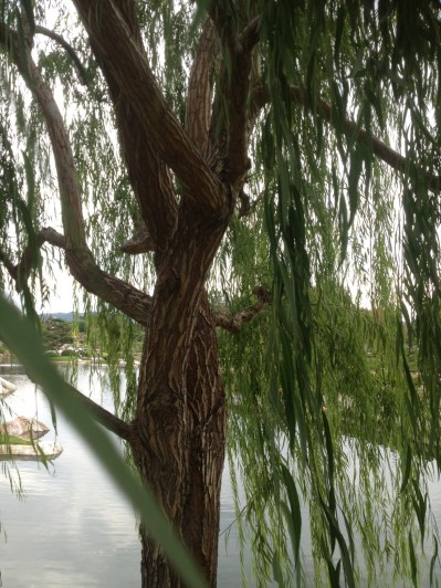 The Weeping Willow Tree is symbolic of the female persona-kind, loving and bending...