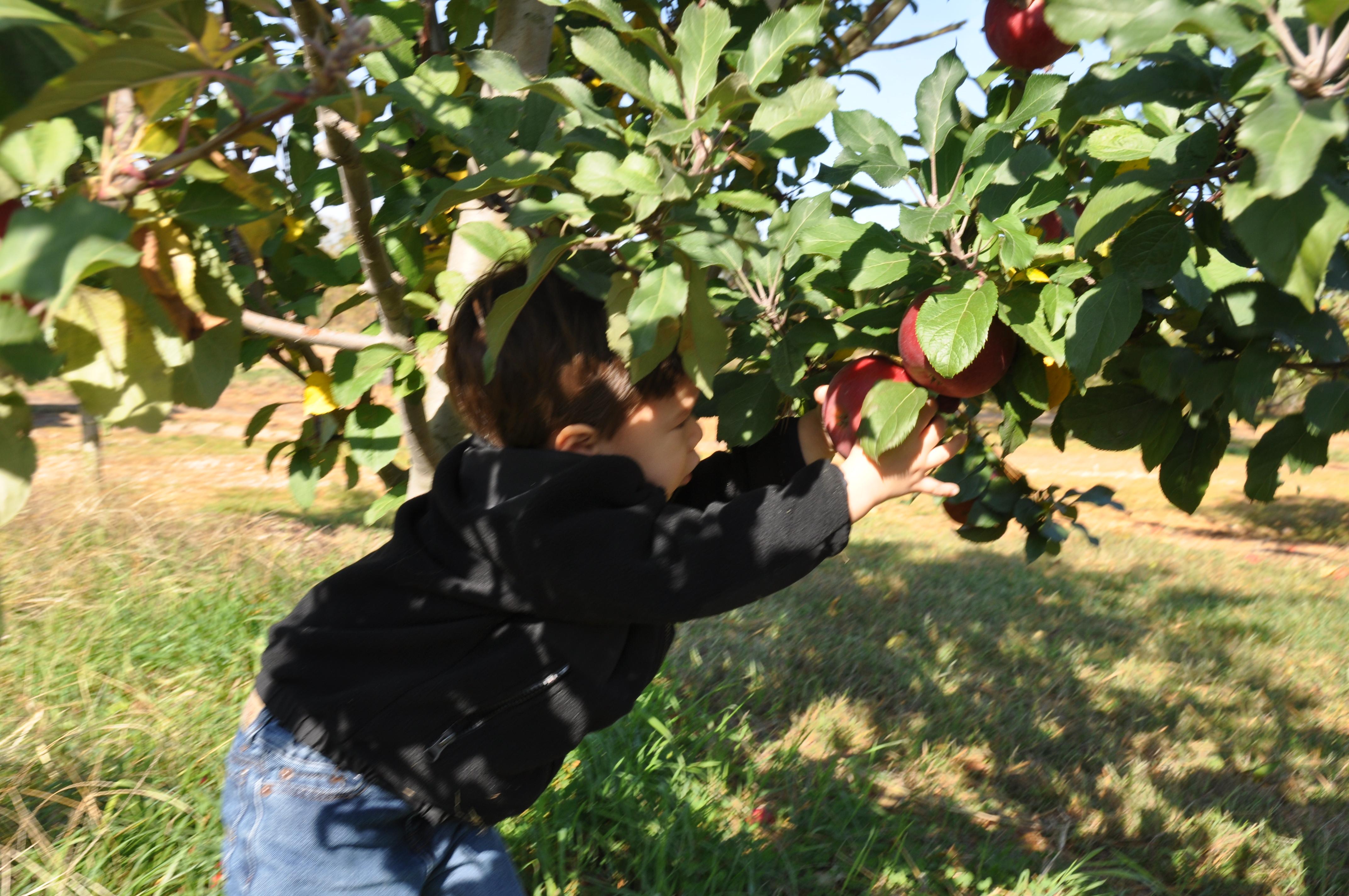 Apple Picking Practice