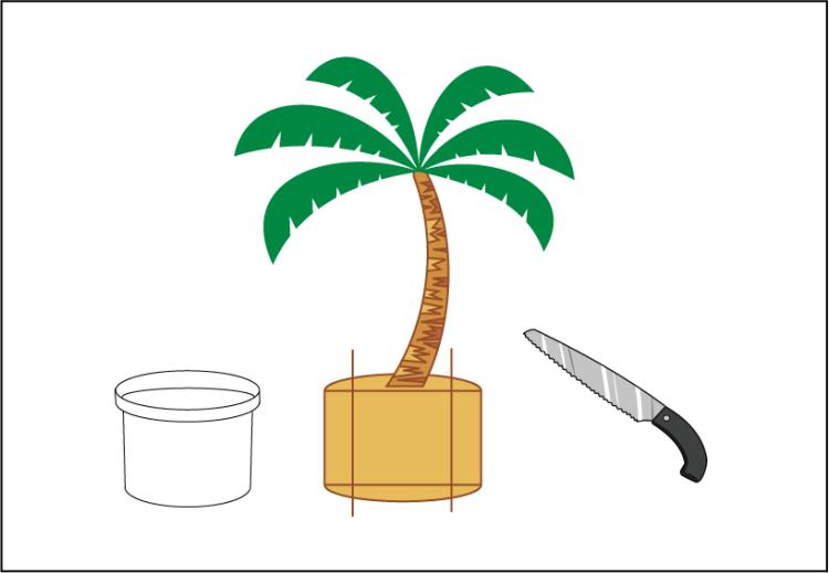 フェニックスの植え替え