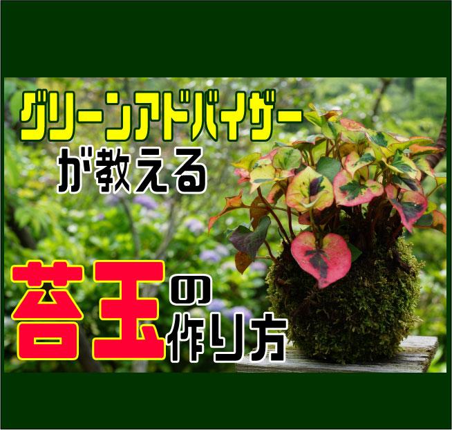 苔玉の作り方表紙