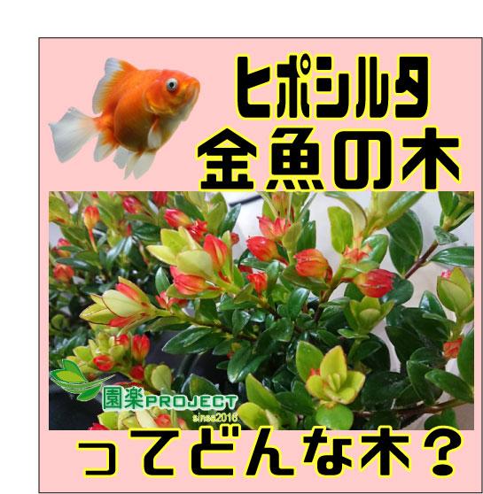 金魚の木表紙