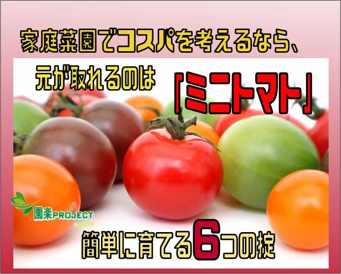 ミニトマト表紙