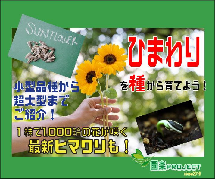 ひまわり2-表紙