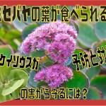 ミセバヤ表紙