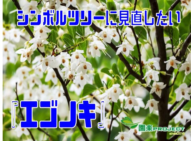 エゴノキ表紙