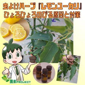 レモンユーカリ表紙