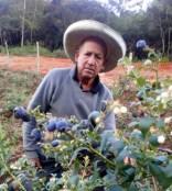 AGRICULTOR ASESORADO b