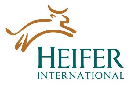giving heifer