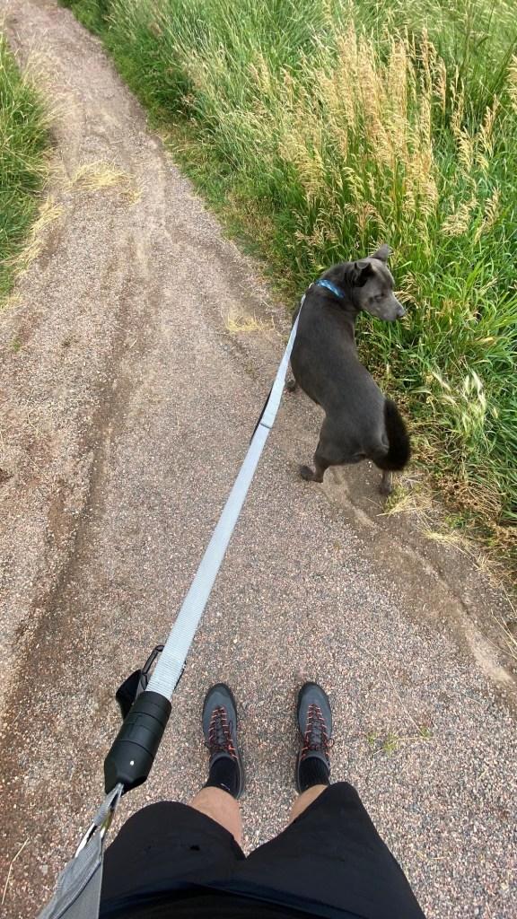Life Handle Dog Leash- Hands Free 3