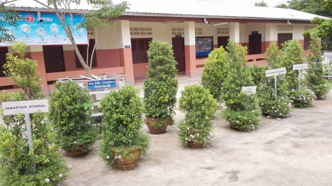 Bäume in Pflanztöpfen im Juni 2016