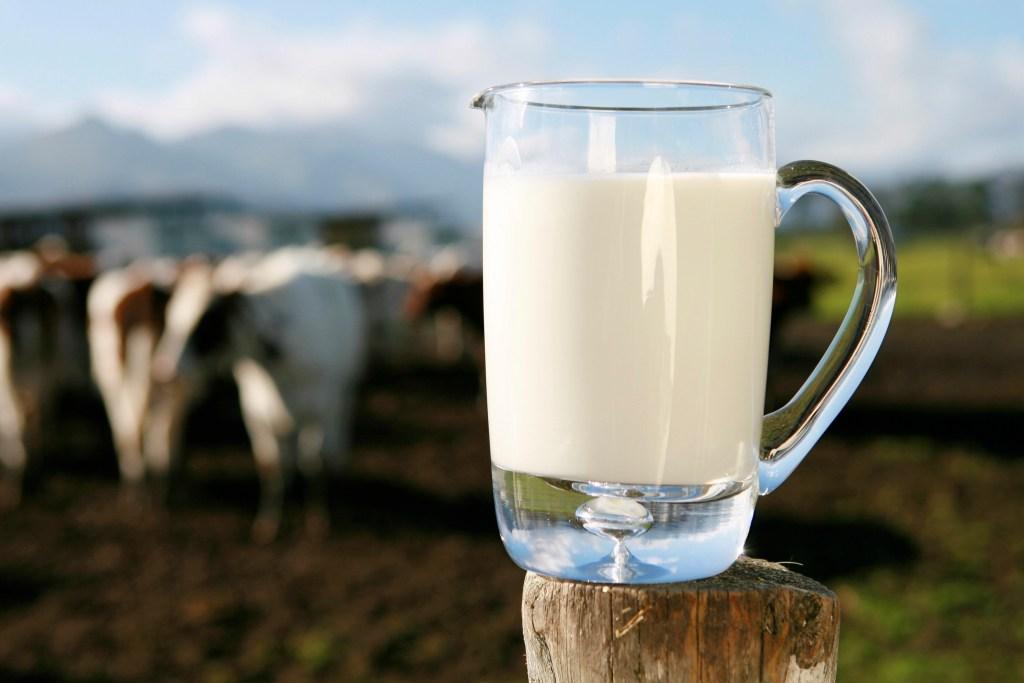 imagem de jarra de leite com vacas ao fundo