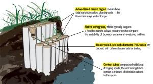Restoring tidal marshlands | Berkeley Engineer Spring 2016