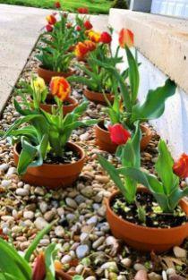 √ Easy_to_Update Potted Border 2019 _frontyardlandscaping _landscapingideas _potflower _flowergarden