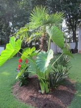 (49_) Front Yard Landscaping Ideas _ Simple Design for Garden & Beds _homeoutdoor _outdoorliving _la (6)