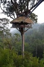 7 Cool Treehouse Ideas and also The Best Ways To build it