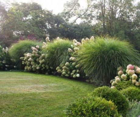 Beautiful ideas for landscaping with ornamental grasses used as an informal grass hedge_ mass plante.