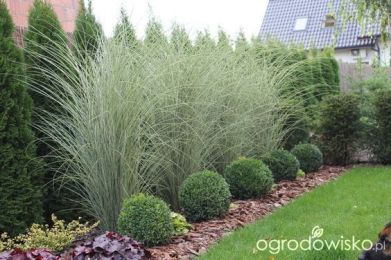 Best pictures_ images and photos about front yard landscaping ideas with porch _homedecor _gardende (5)