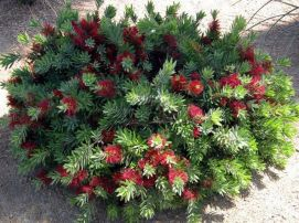 Best pictures_ images and photos about full sun front yard landscaping ideas _homedecor _gardendec (10)
