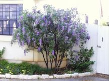 Best pictures_ images and photos about full sun front yard landscaping ideas _homedecor _gardendec (19)