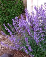 Best pictures_ images and photos about full sun front yard landscaping ideas _homedecor _gardendec (2)