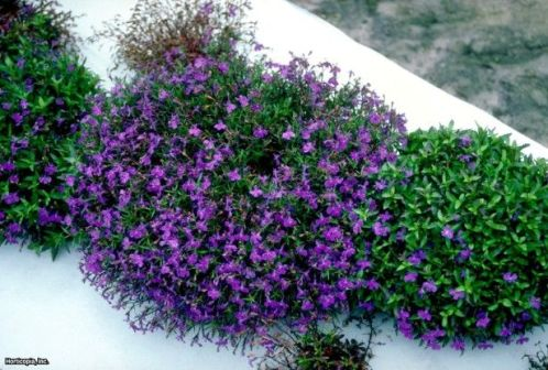 Best pictures_ images and photos about full sun front yard landscaping ideas _homedecor _gardendec (5)
