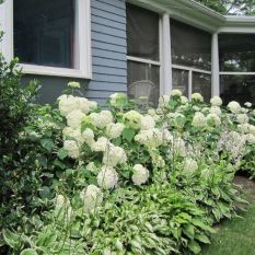 Front Yard Landscaping Ideas _ Lush Hydrangeas and Hostas 2019 _homeoutdoor _outdoorliving _flowerg