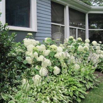 Front Yard Landscaping Ideas _ Lush Hydrangeas and Hostas 2019 _homeoutdoor _outdoorliving _flowerg