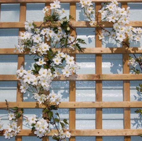 Front Yard Landscaping Ideas _ clematis climbing 2019 _flowergarden _frontyardlandscaping _walldecor