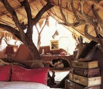 I want a tree going through my poetry room