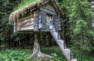 Tree house escape_ grass may greener on roof_other side.