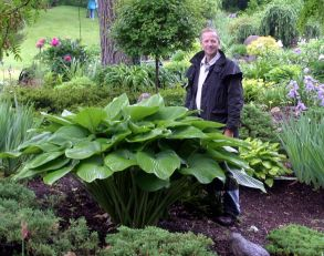 _Vim and Vigor_ hosta _ WOW___ I can_t believe the size of this hosta_ AWESOME & beautiful. Inspires me.
