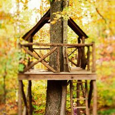 What to Know Before You Build a Treehouse _ Popular Mechanics