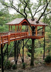 sport life_ Treehouses Of The World